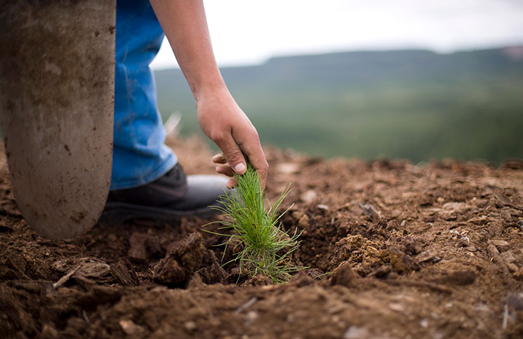 This tiny seedling is where the timber journey begins.